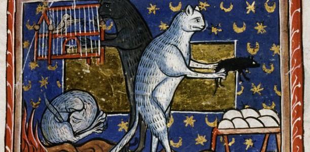 Vilka djurs avföring är oren enligt malikiskolan?