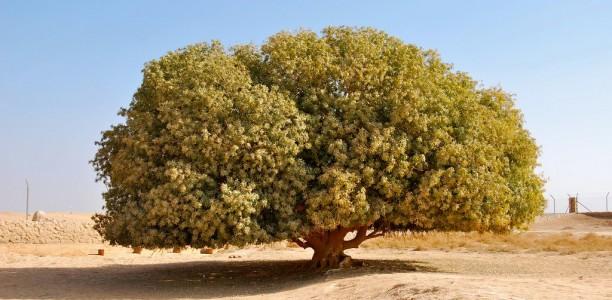 Det välsignade trädet