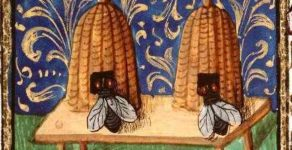 Är insekter orena och förbjudna att äta?